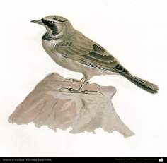 Drawing of a bird - Persian painting - By prof.Kamal ol-Molk (1902)