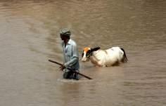 Überflutung in Punjab - Pakistan - Bild des Tages