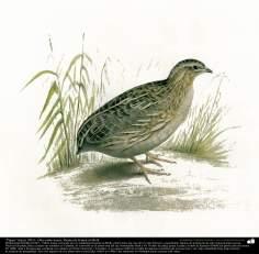 """""""Vogel"""" (zu 1903) - Öl auf Leinwand; Malereien von Kamal ol-Molk (5) - Islamische Kunst"""