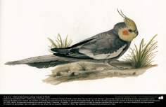 "Pintura - ""Un ave"" - artista: Kamal ol-Molk (13)"