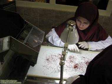 Iranian women on the production of Saffron
