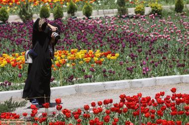 Fotografa muçulmana, registrando a beleza da primevera, lindas flores em um jardím