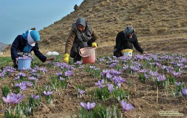Il Lavoro delle donne musulmane-Coltivare i fiori