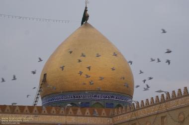 Cúpula do Santuário do Imam Ali (AS) e os pássaros que a rodeiam