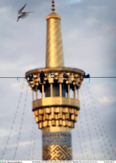 Minarete e os passáros no Santuário do Imam Rida (AS)  - Mashad Irã